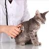 Ветеринарные клиники в Шатках